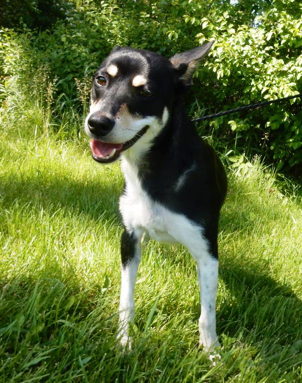 Dog Control   Allen County Ohio